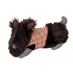 Hund Oscar